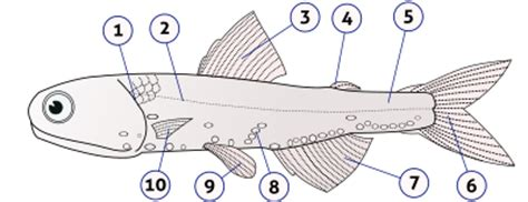 The animals In class chondrichthyes has the intestine with