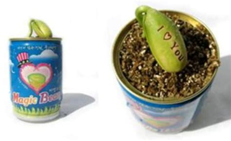 Magic Bean Word Sprout - Cool Hunting