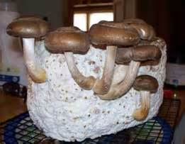 All About Mushroom Growing Kits