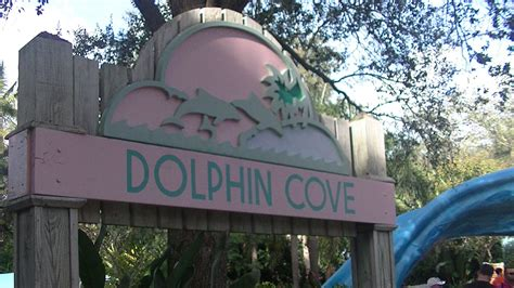 Dolphin Cove - Orlando Tickets, Hotels, Packages